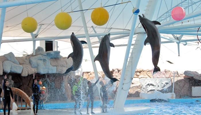 پارک دلفینهای کیش